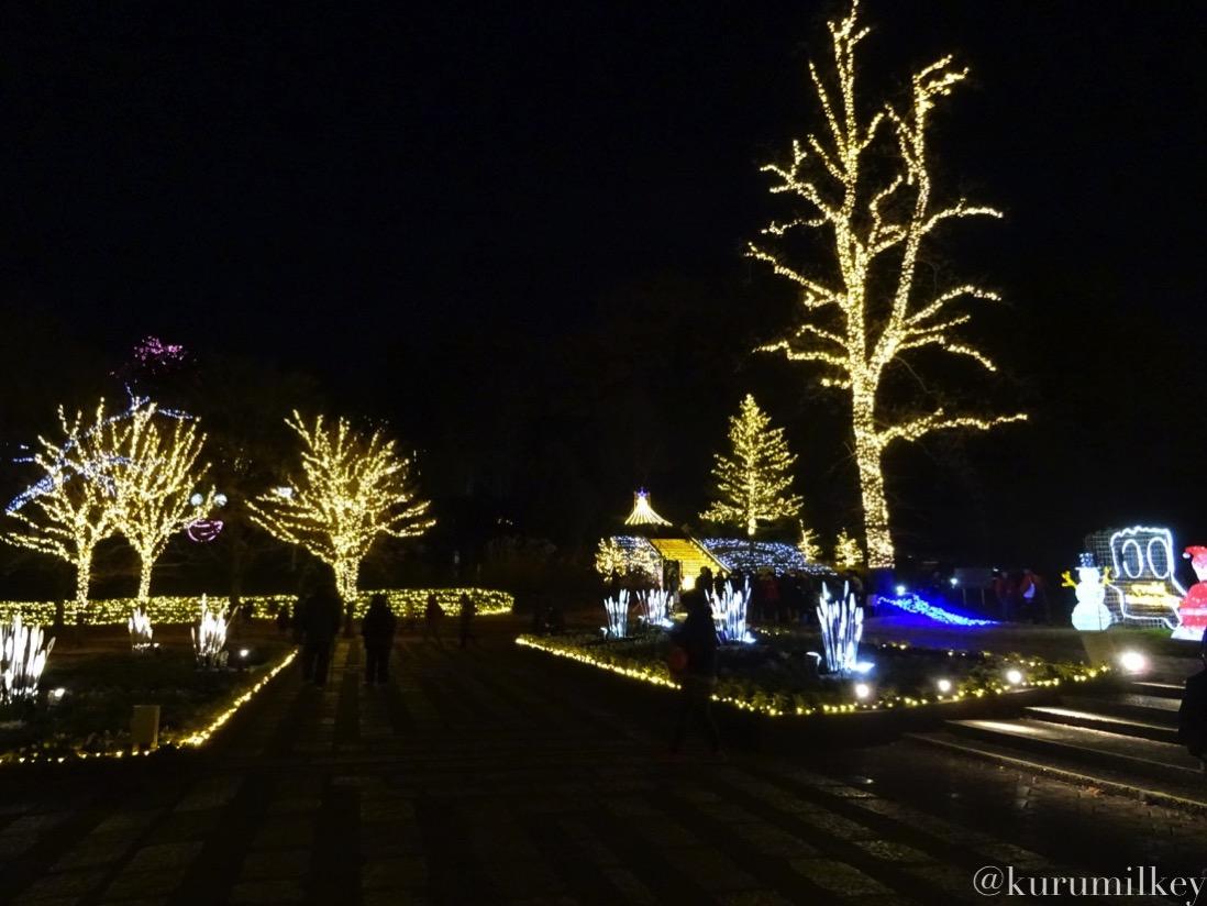 森林公園スターライトクリスマス
